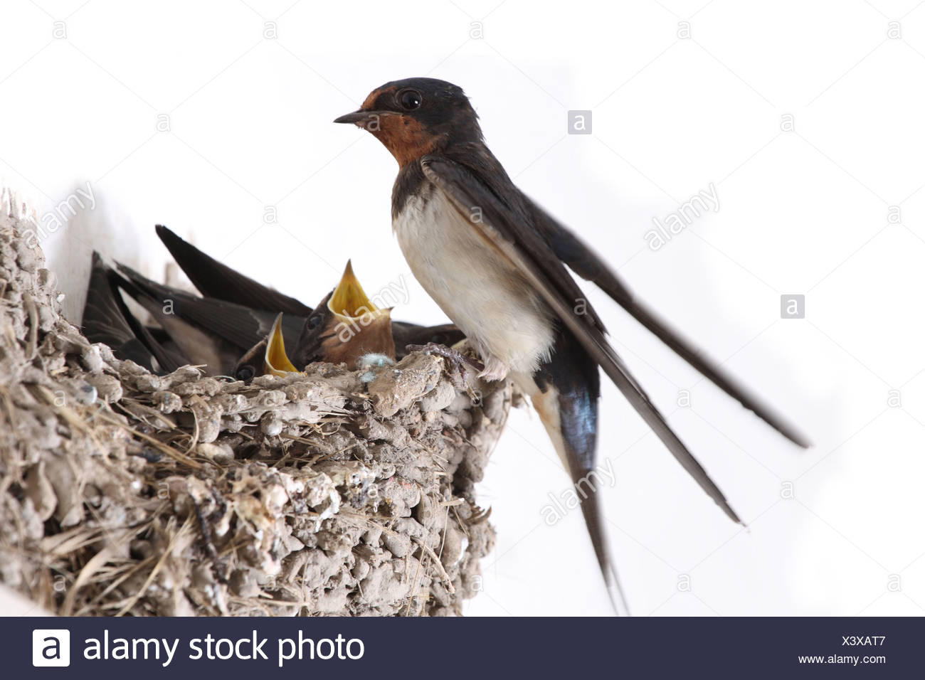 hungry birds - Stock Image