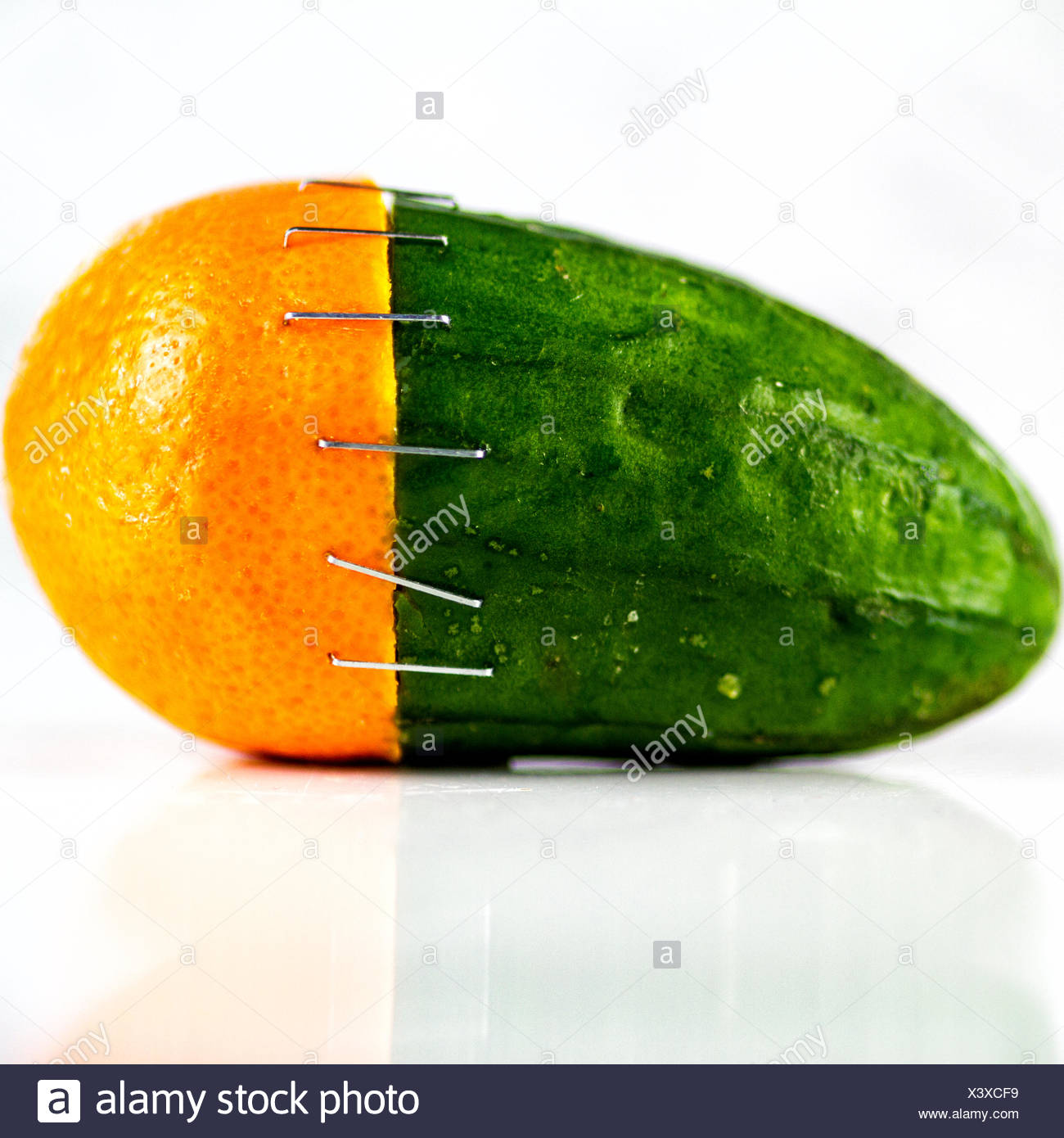 Orange and cucumber stapled together - Stock Image