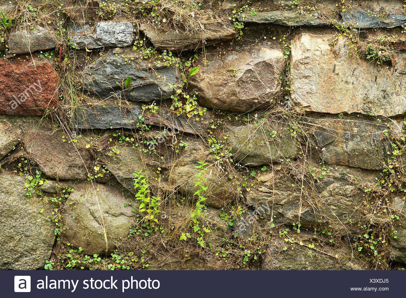 feldsteinmauer / fieldstone wall stock photo: 277791309 - alamy