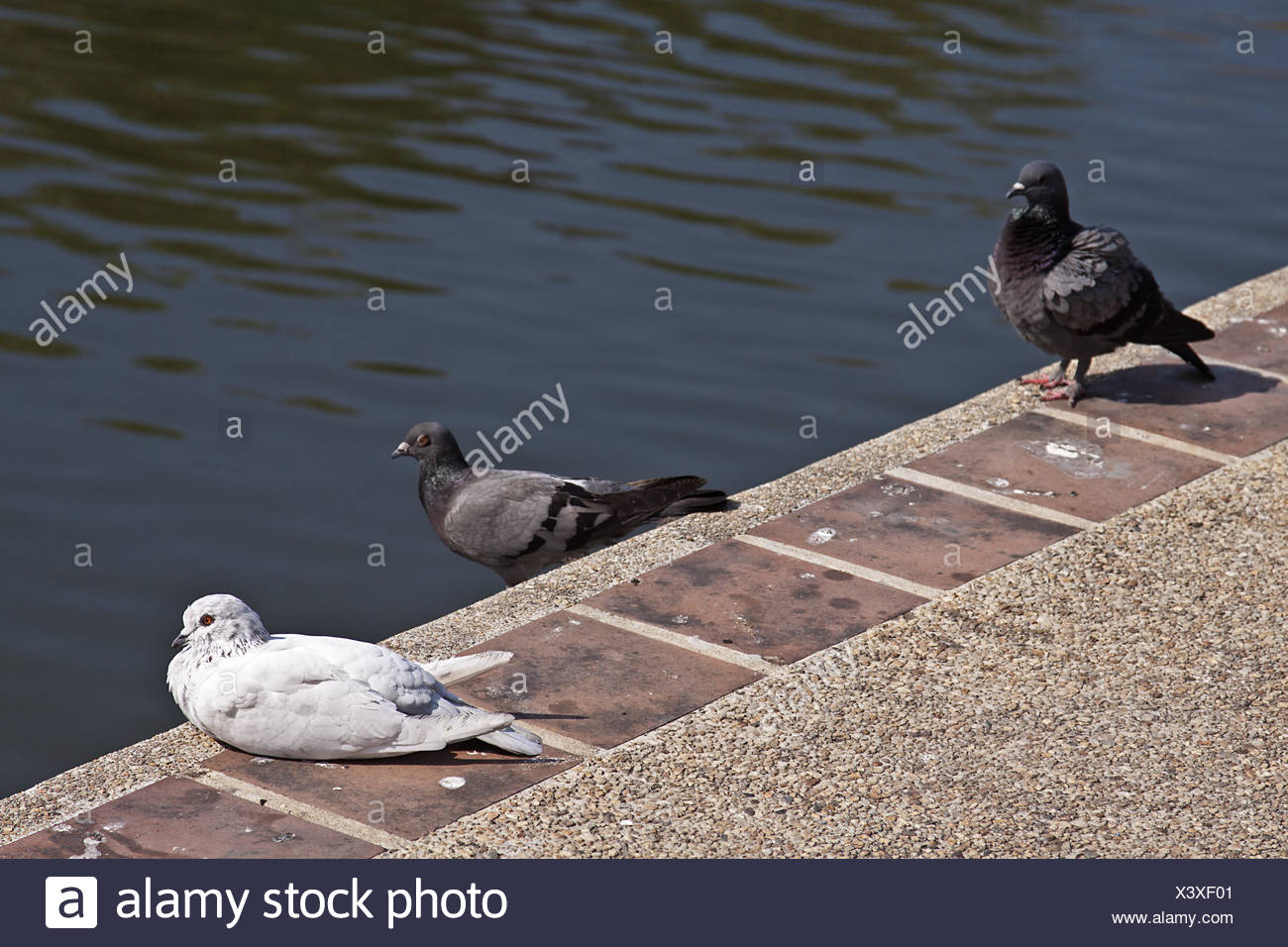 Pigeon droppings Stock Photo