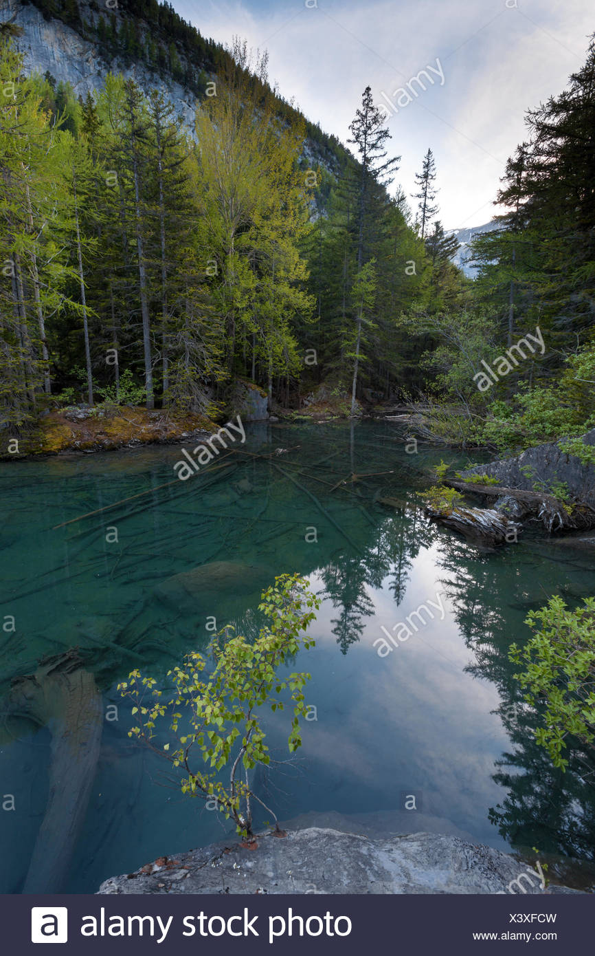 Primeval forest, forest, Derborence, Switzerland, Europe, canton, Valais, mountain lake, lake, - Stock Image