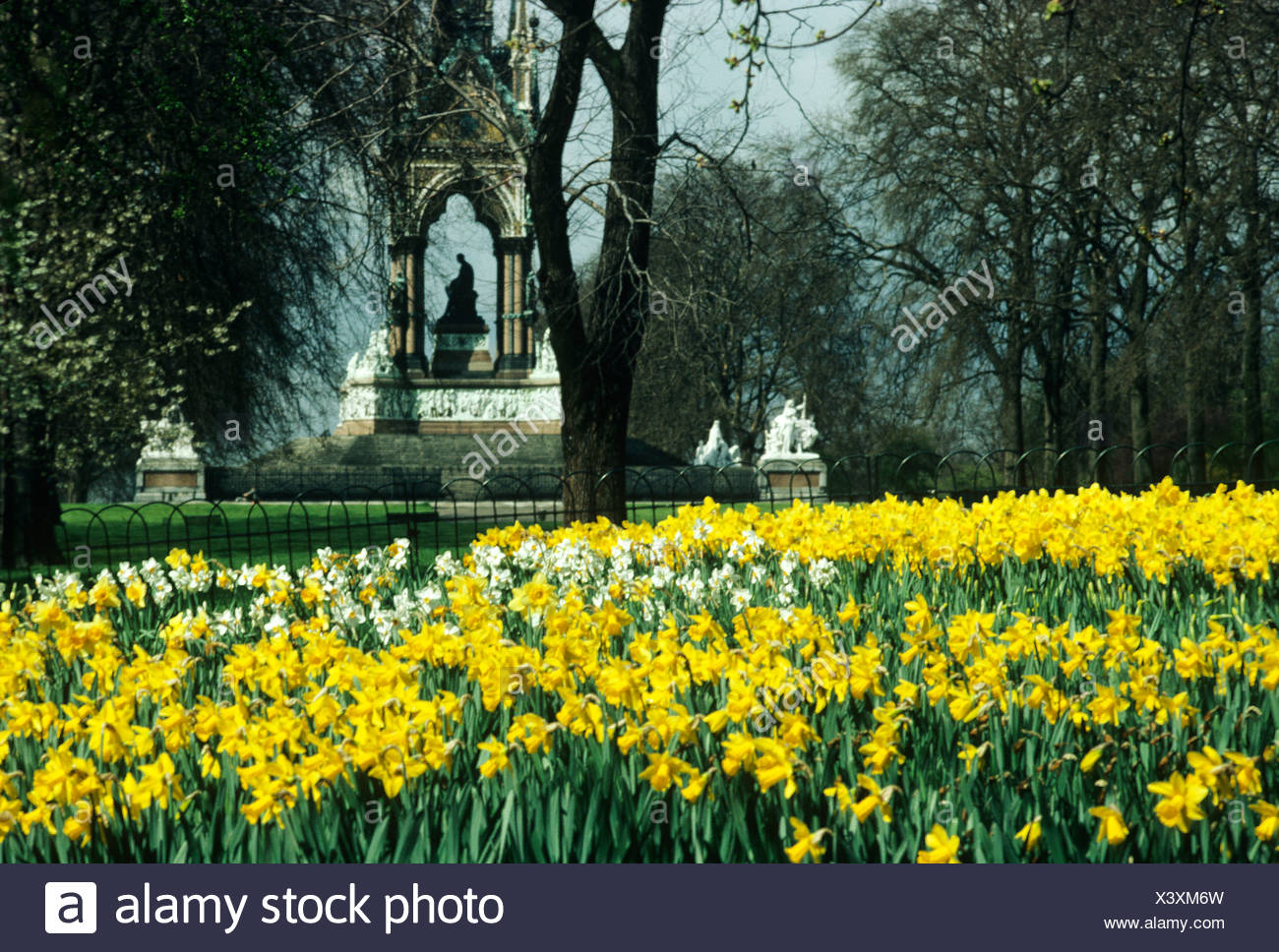 Albert Memorial Daffodils London England Uk Spring Flowers