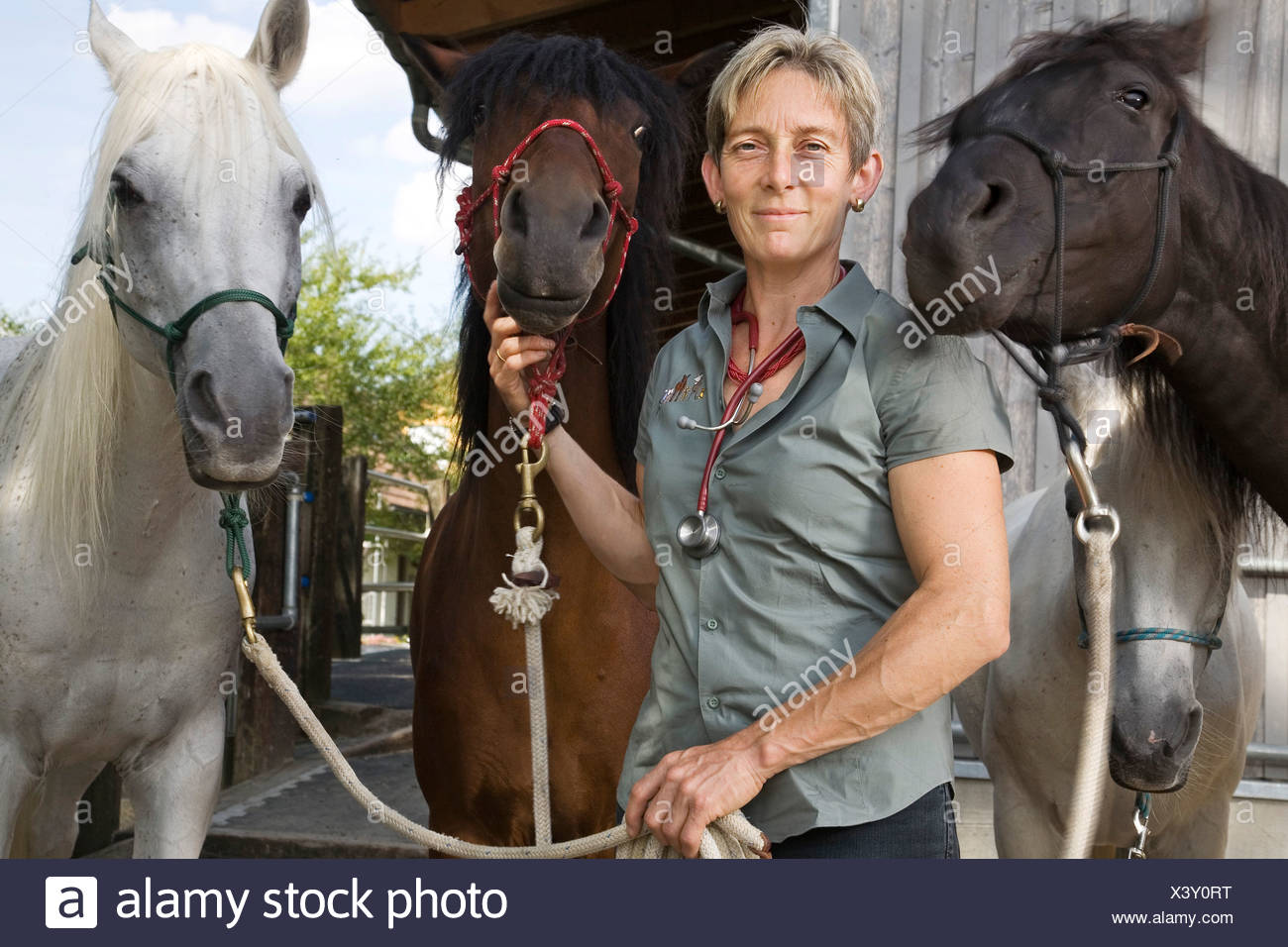 Veterinarian specialising in large animals with her four horses, Steinmaur, Zurich, Switzerland, Europe - Stock Image