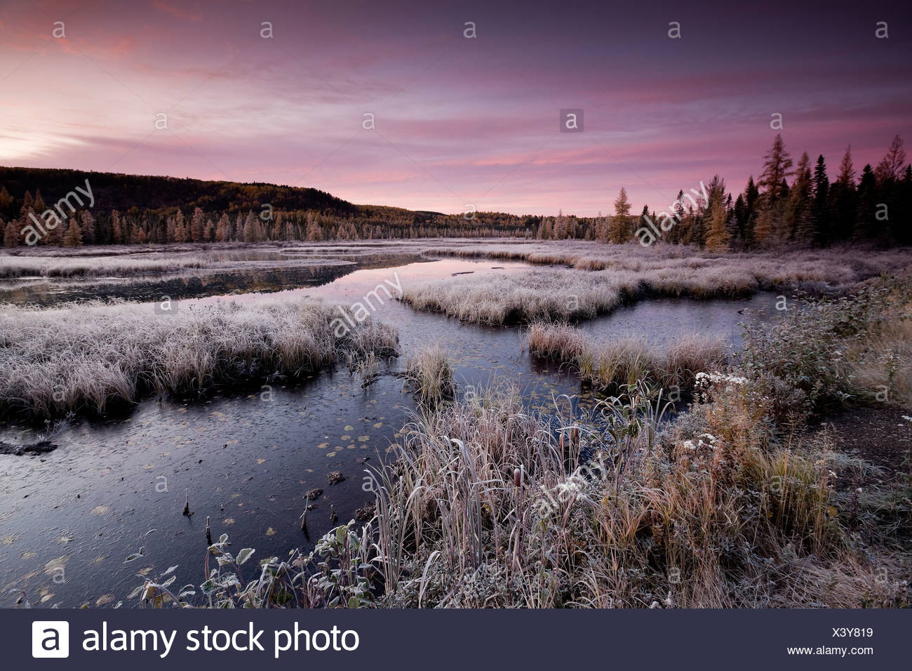 Pink skies first-light frosty Autumn morning - Stock Image