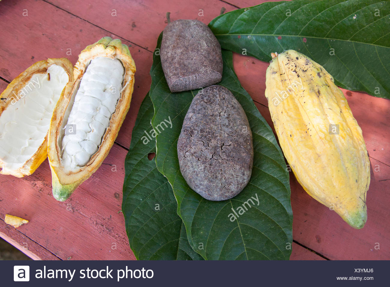 Cacao fruits and artisanal chocolate. - Stock Image