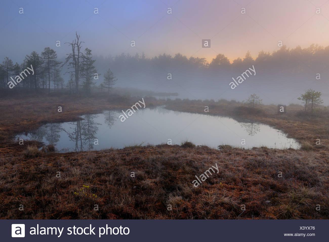 Swamp at dawn, early morning, Dalarna, Sweden, Scandinavia, Europe - Stock Image