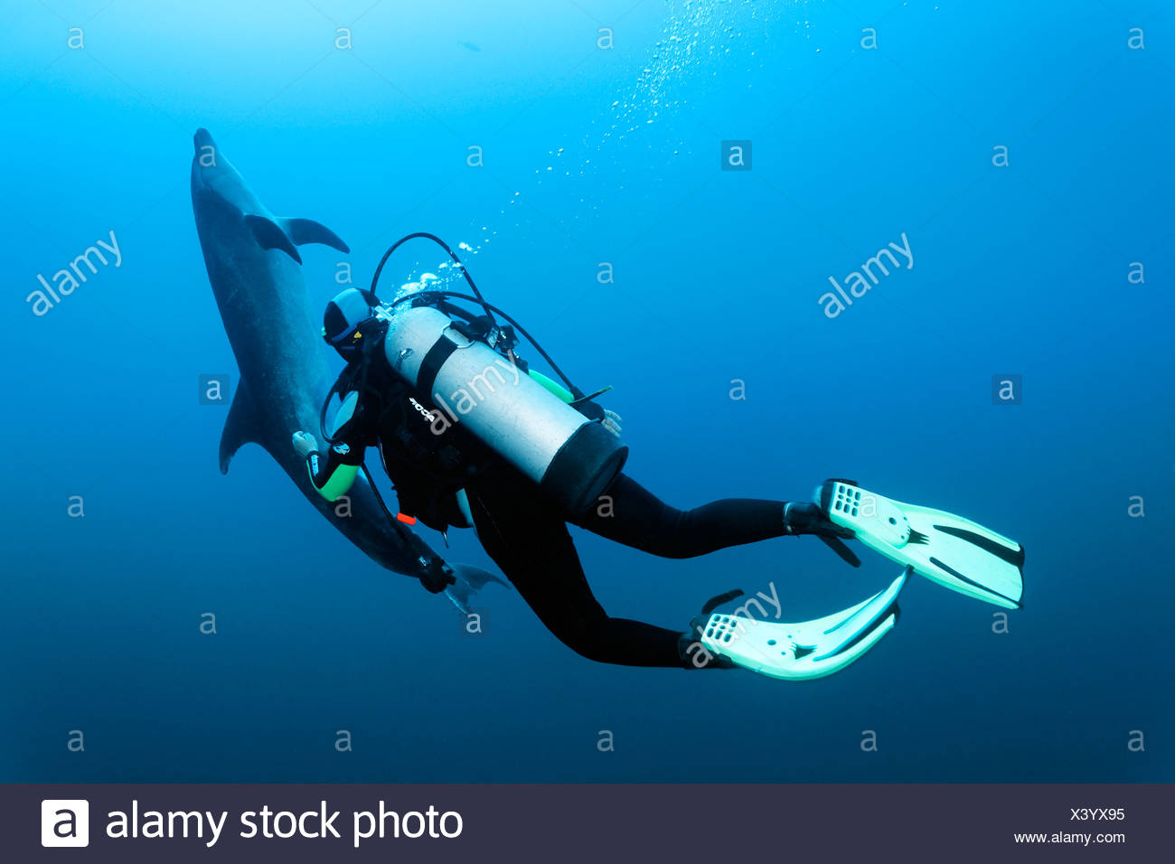 Suba diver watching a Bottlenose Dolphin (Tursiops truncatus), Roca Partida, Revillagigedo Islands, Mexico, America - Stock Image