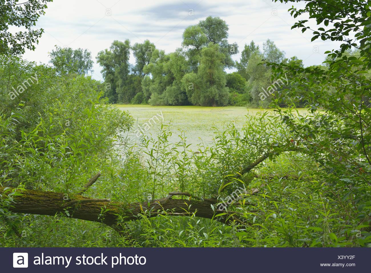 Nature Reserve Kuehkopf, Germany Stock Photo
