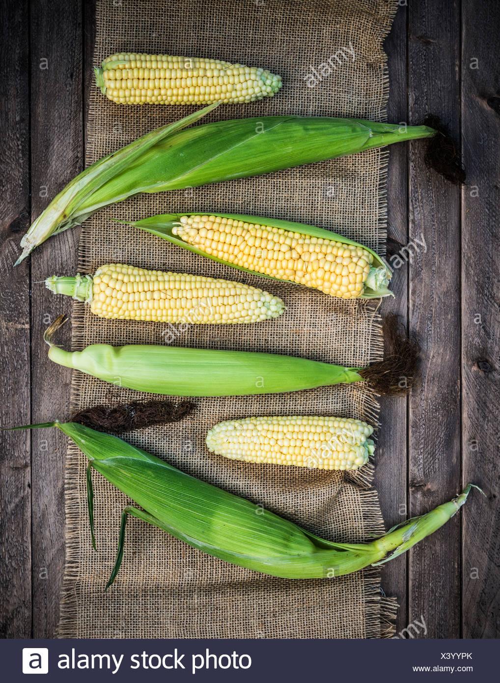 Freshly picked corn on the cob. - Stock Image