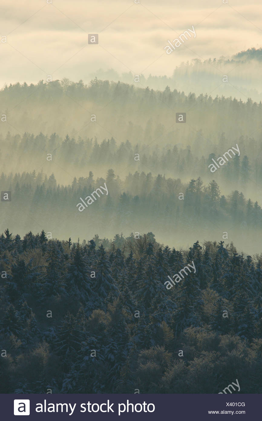 Tree, trees, pines, cold, midland, conifer, coniferous forest, nature, fog, fog patches, silhouette, snow, swath, Switzerland, Eu - Stock Image
