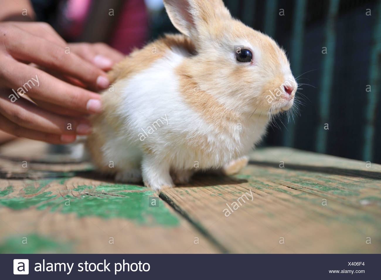 Children's holiday activity a Petting Zoo - Stock Image