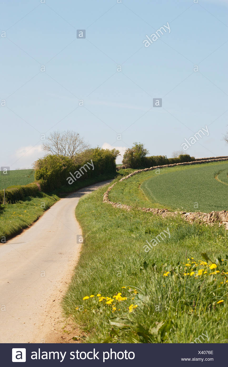 England, country lane with hedge - Stock Image