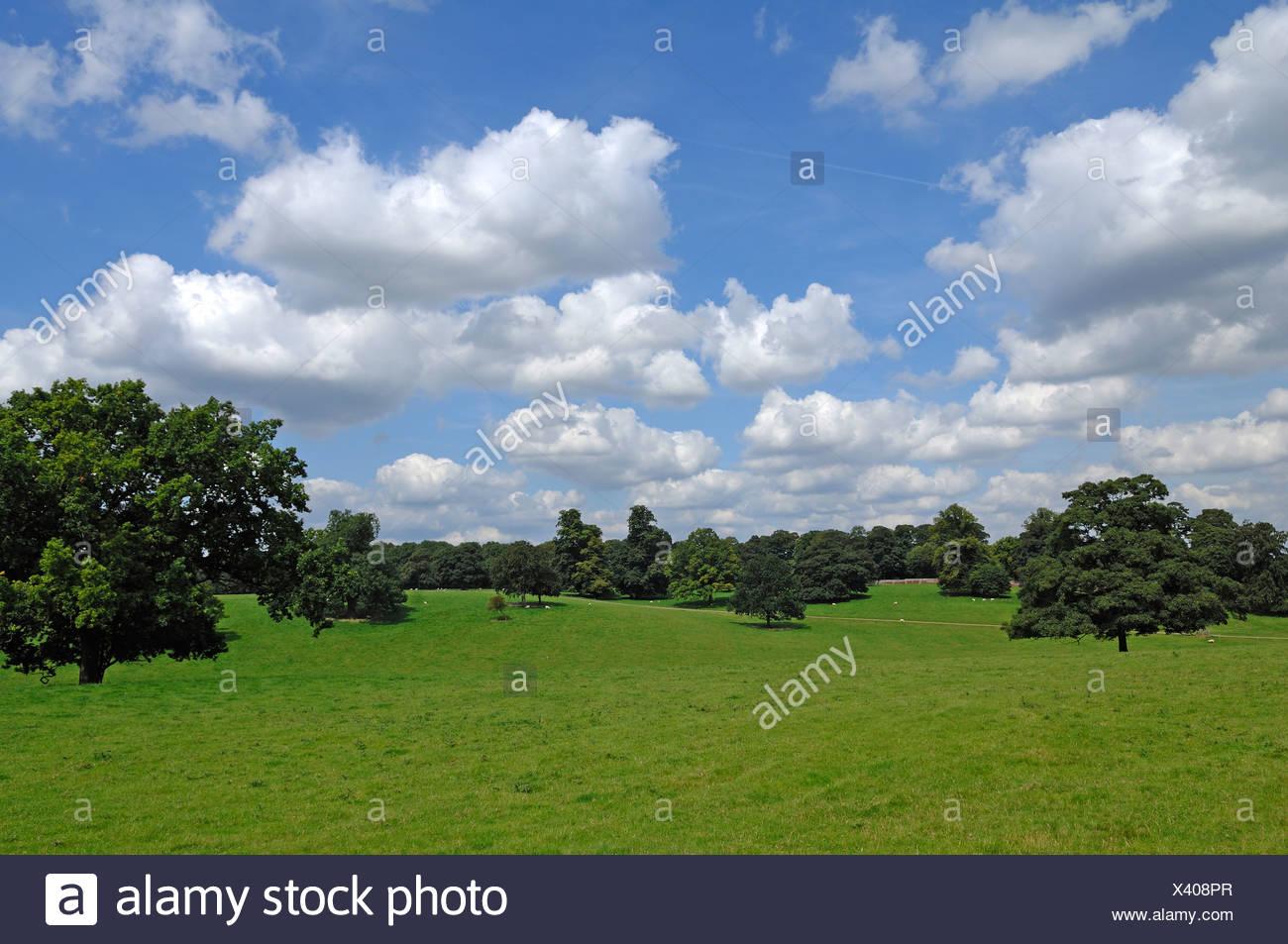 Park, 'Boughton House', Geddington, Kettering, Northamptonshire, England, United Kingdom, Europe - Stock Image