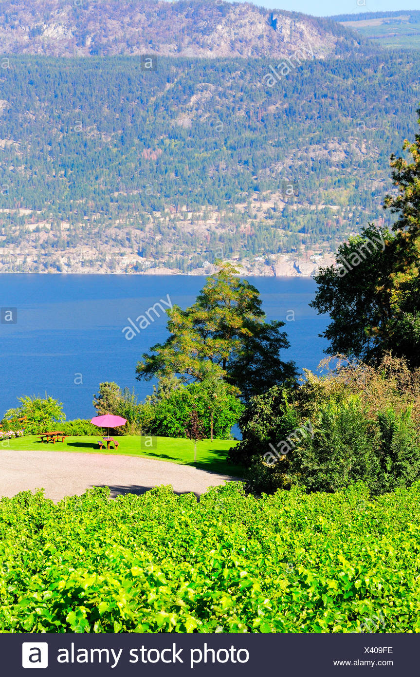 Arrowleaf Cellars vineyard and yard area on Okanagan Lake in Lake Country British Columbia Canada Stock Photo 277832002 - Alamy & Arrowleaf Cellars vineyard and yard area on Okanagan Lake in Lake ...