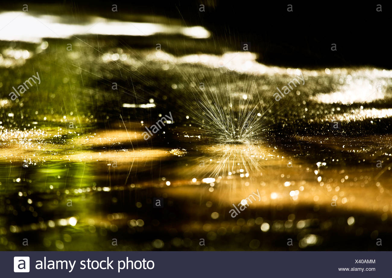 A a piece of dandelion fluff on a puddle - Stock Image