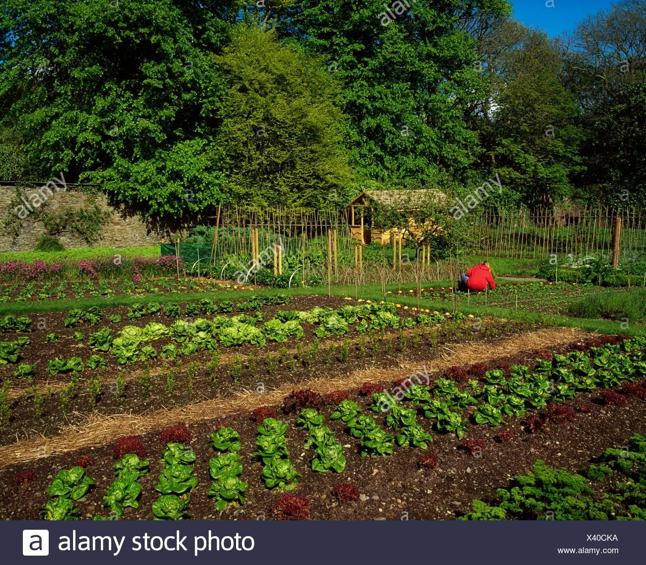 Creagh Gardens, Skibbereen, Co Cork, Ireland, Vegetable Beds In A Walled Garden - Stock Image