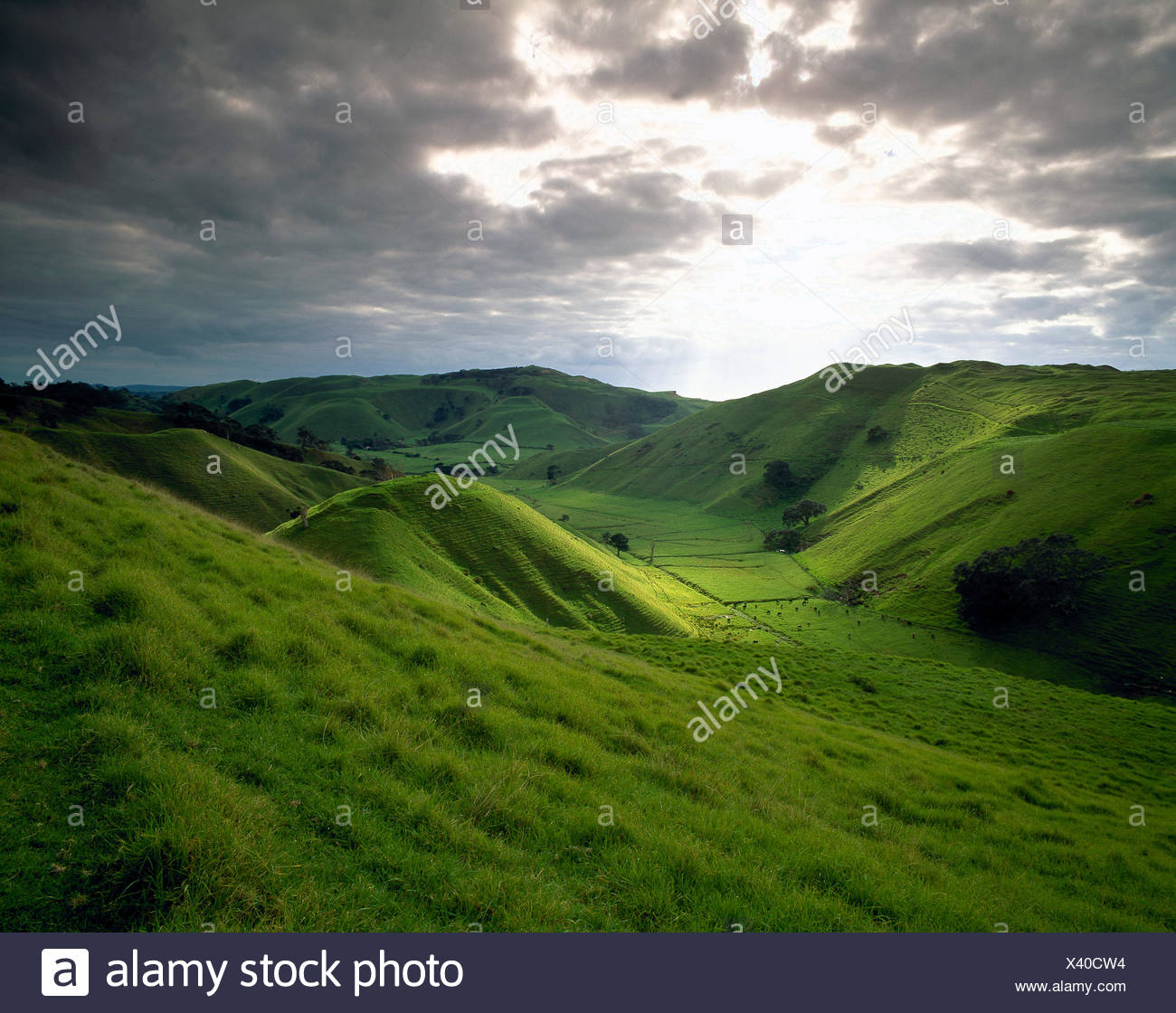 New Zealand. North Island. Auckland Region. Manukau Heads pastoral valley. - Stock Image