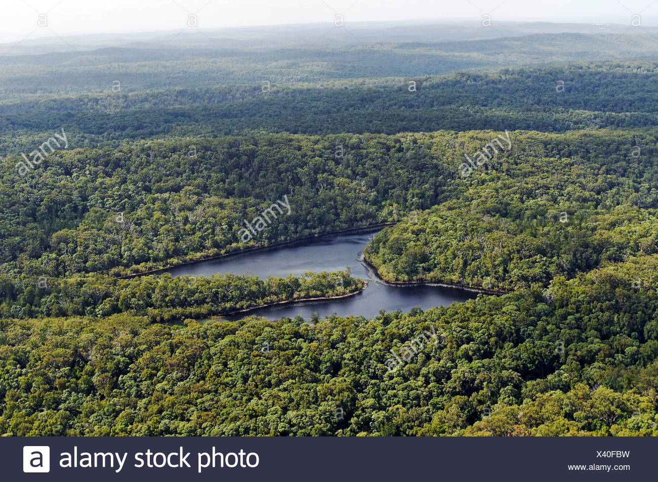 Aerial picture of a rainforest and a lake on Fraser Island, Queensland, Australia Stock Photo