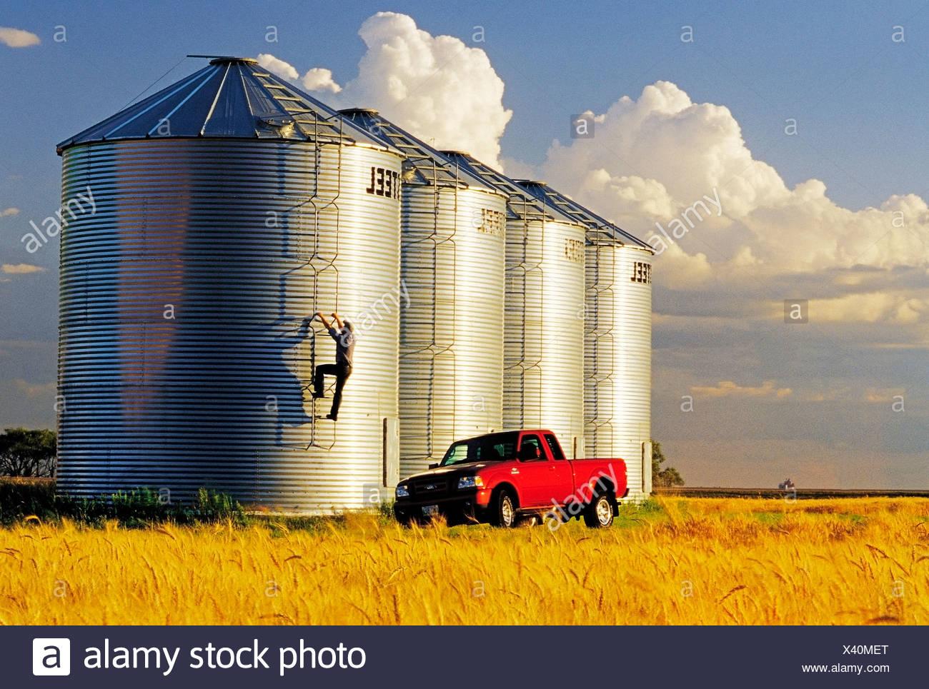 A farmer checks his grain storage bins located in front of a mature