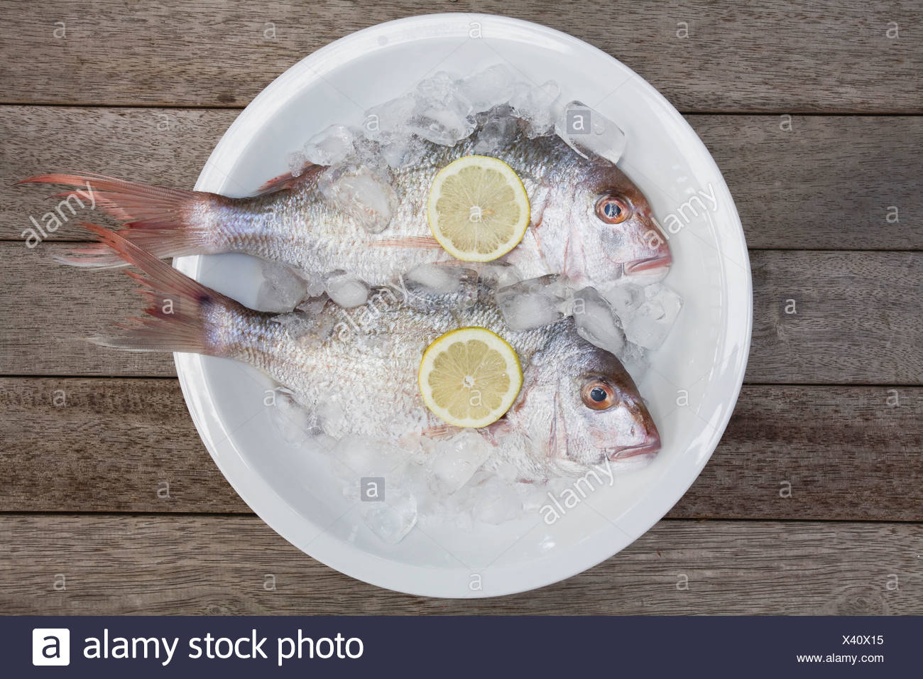 Red Snapper (Lutjanus campechanus) in a bowl, elevated view Stock Photo