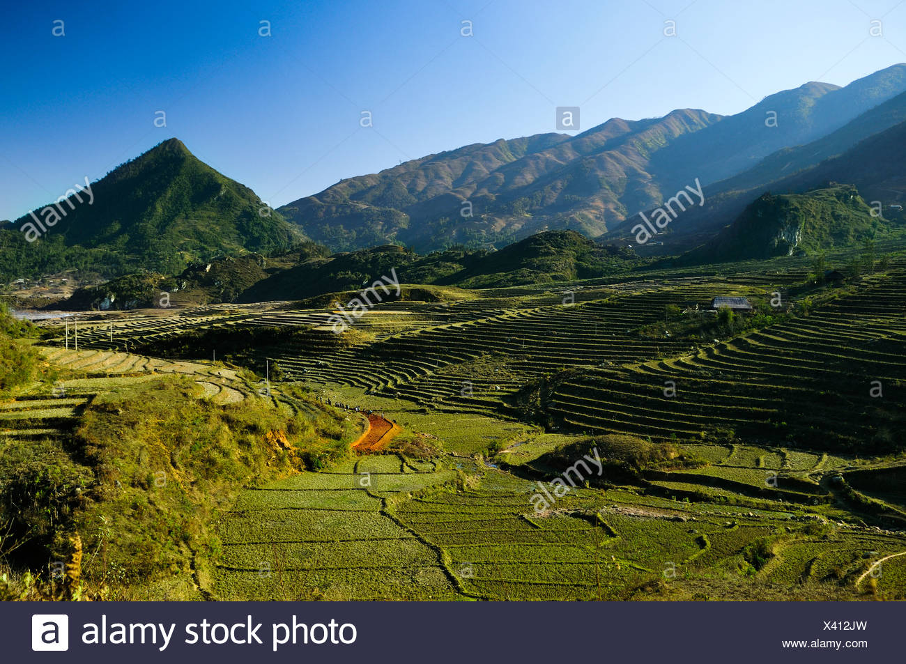 New terrace, rice terraces, rice paddies in Sapa or Sa Pa, Lao Cai province, northern Vietnam, Vietnam, Southeast Asia, Asia - Stock Image
