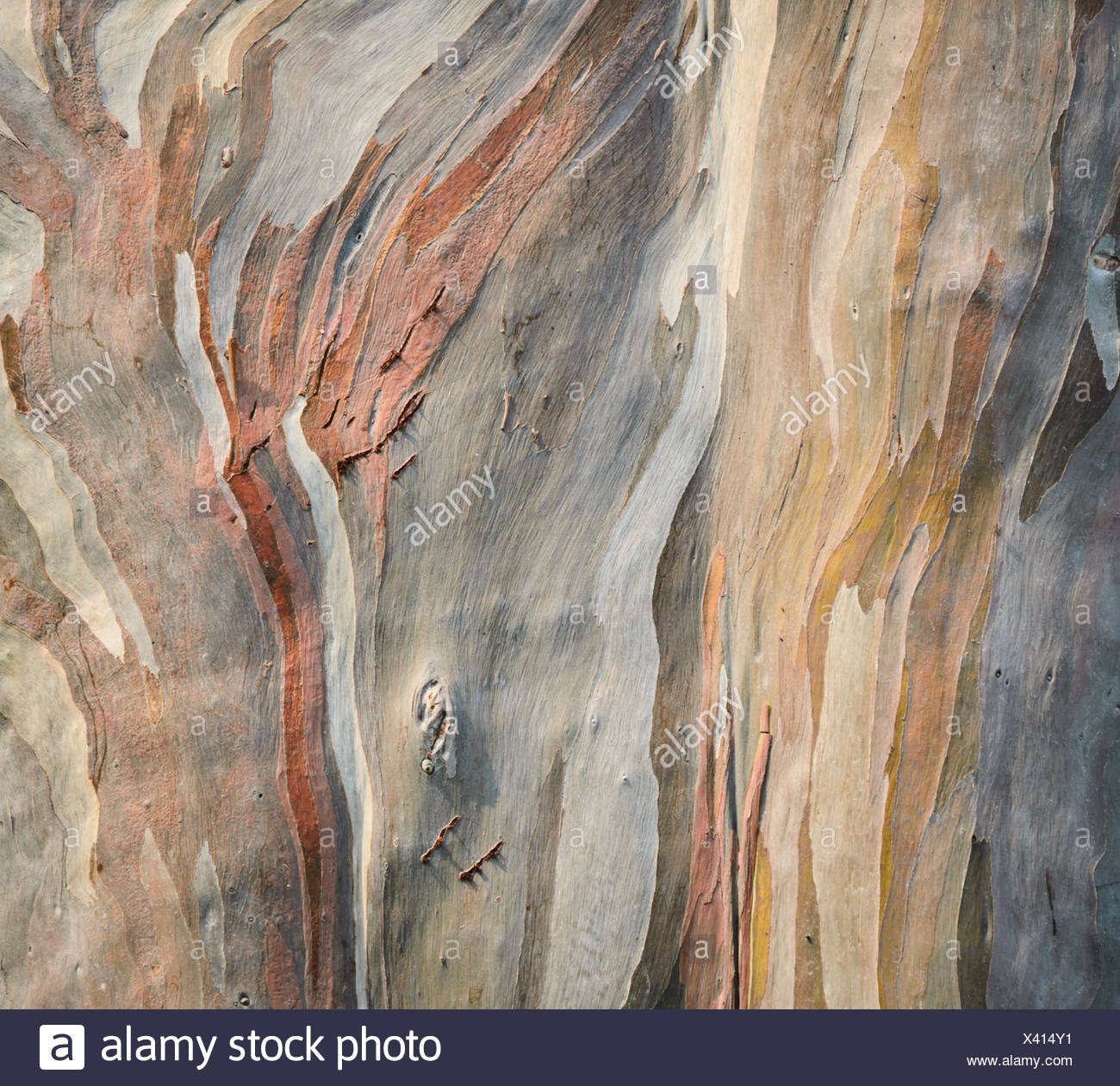 wood brown - Stock Image