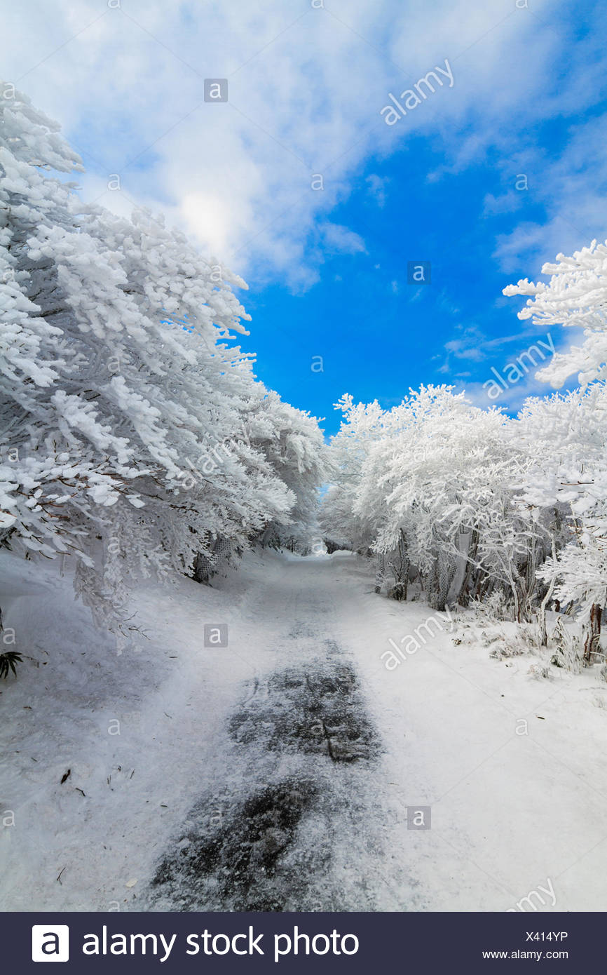 Japan, Chubu Region, Shimo-Ina, Aichi Prefecture, Mt Yuno after snow storm - Stock Image