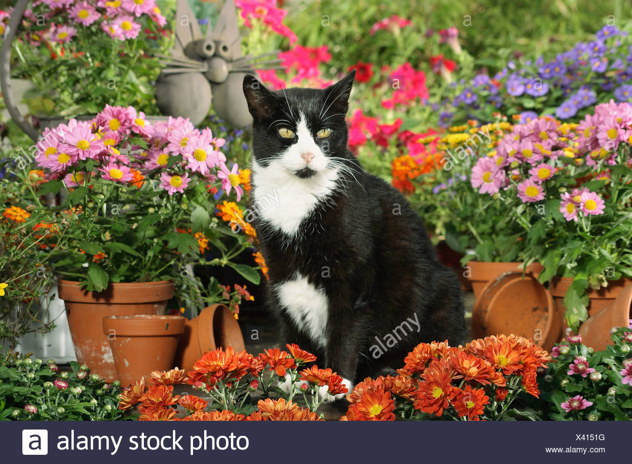 black white domestic cat in between flowers - Stock Image