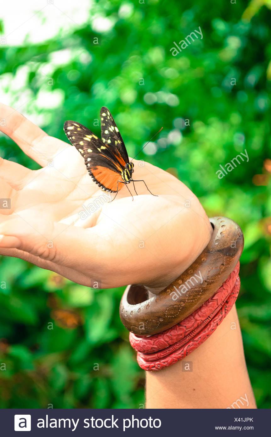 Butterfly talks - Stock Image