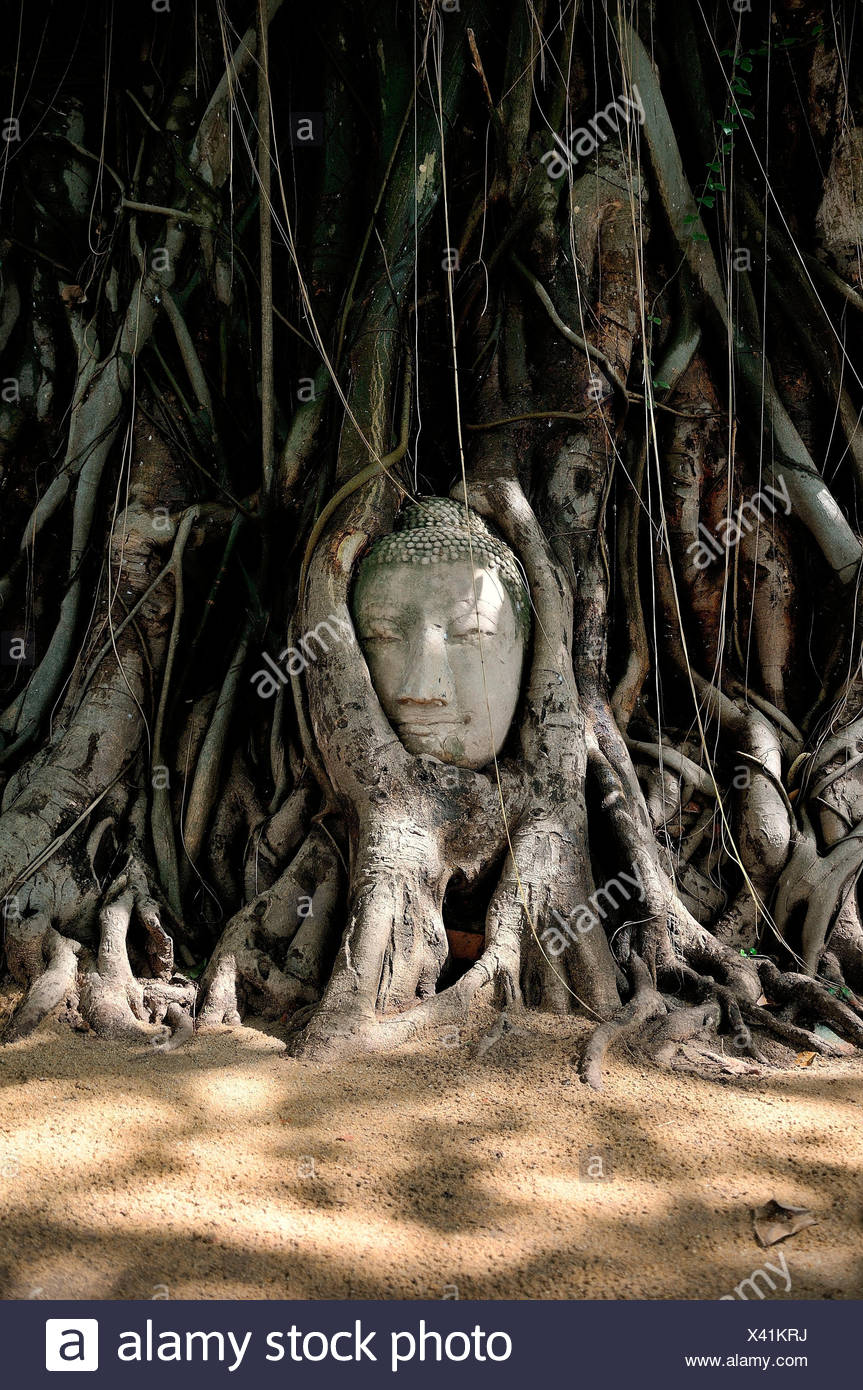 A head abandoned and trapped between the secular roots of a tree in the historic site of Ayutthaya, So much beauty in the simple elements,, - Stock Image