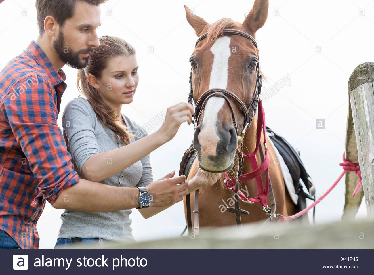 Couple adjusting bridle on horse Stock Photo