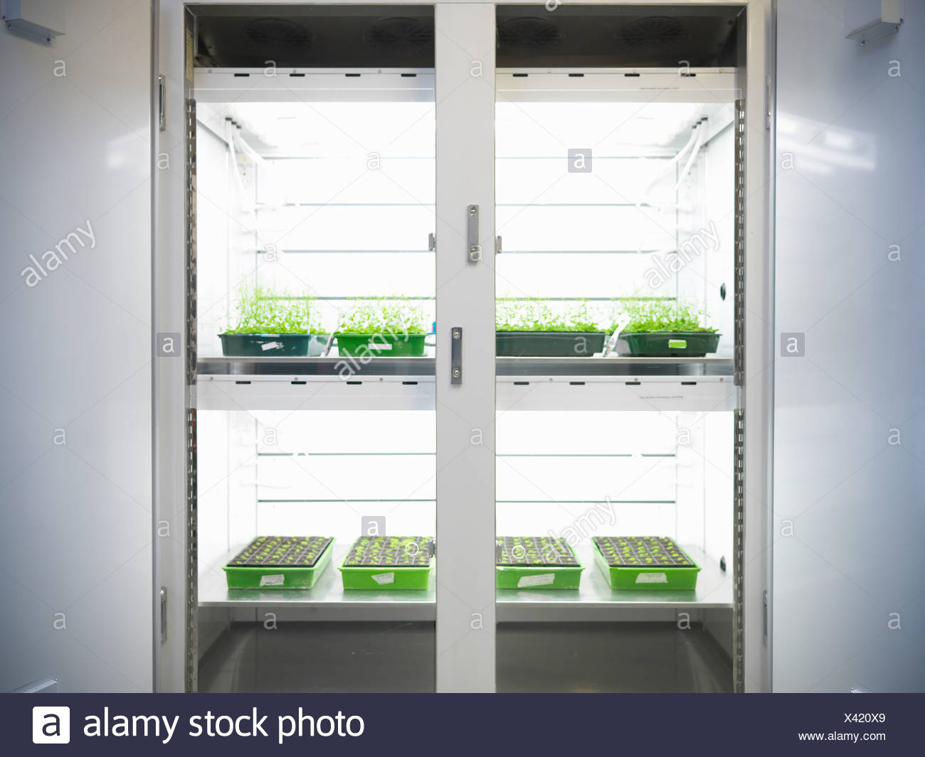 Plants in lab container - Stock Image