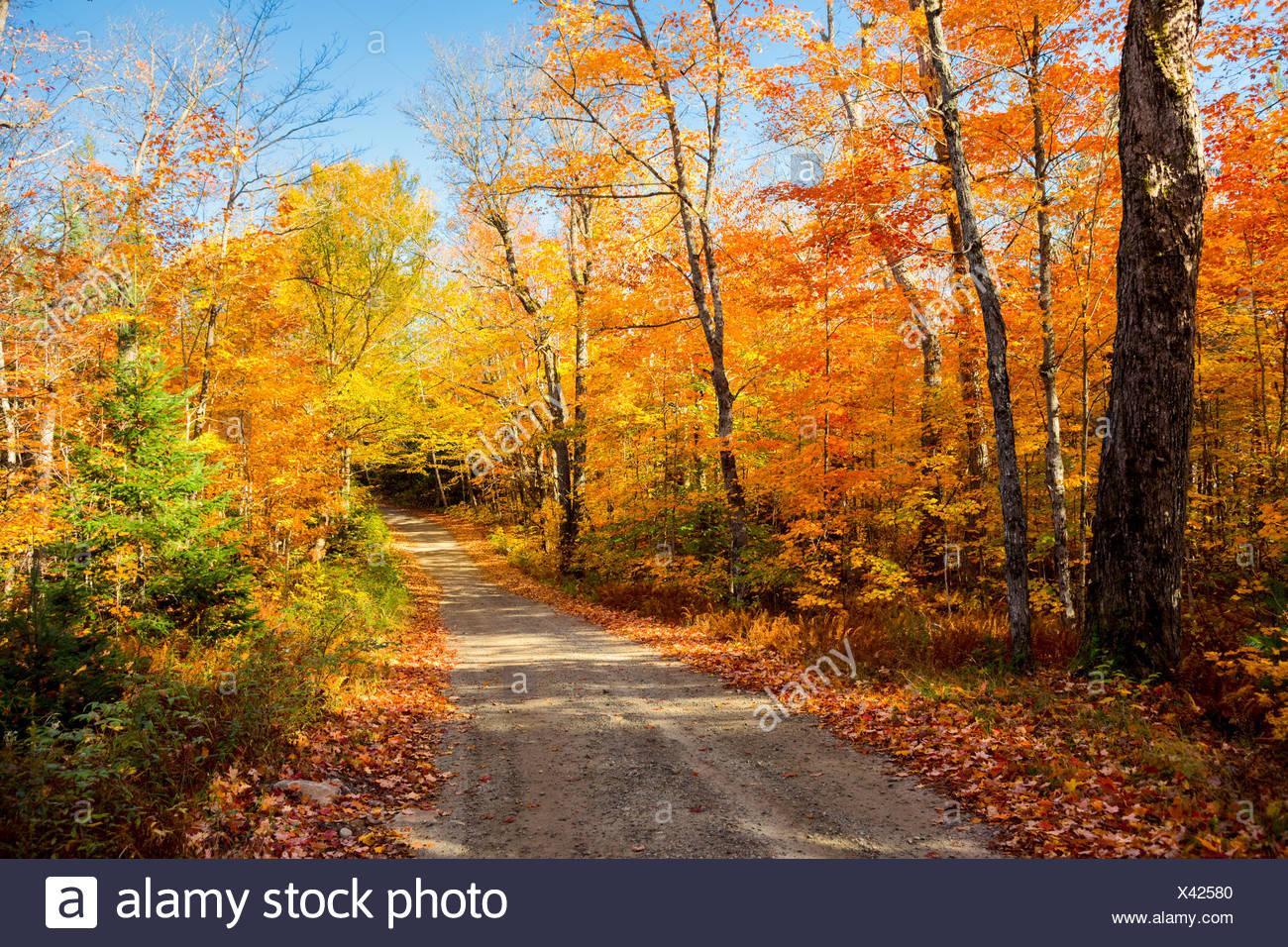 Fall foliage and clay road, Tea Lake, Algonquin Provincial Park, Ontario, Canada - Stock Image