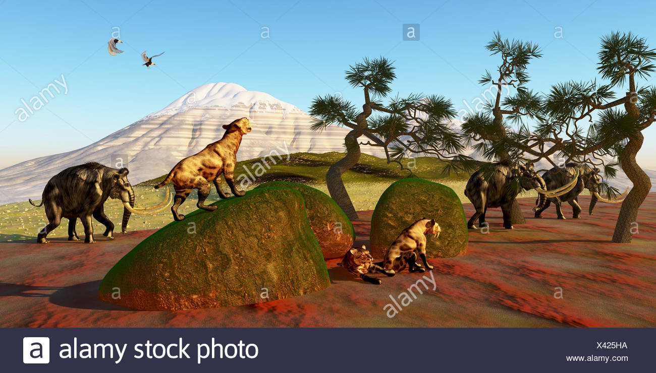Saber Toothed Cat Family - Stock Image