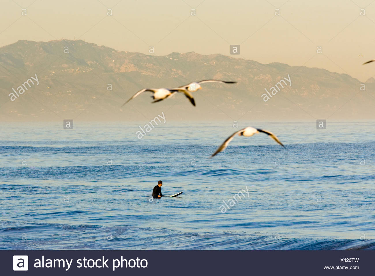 A lone surfer patiently awaits the right wave off of Redondo Beach, California. - Stock Image