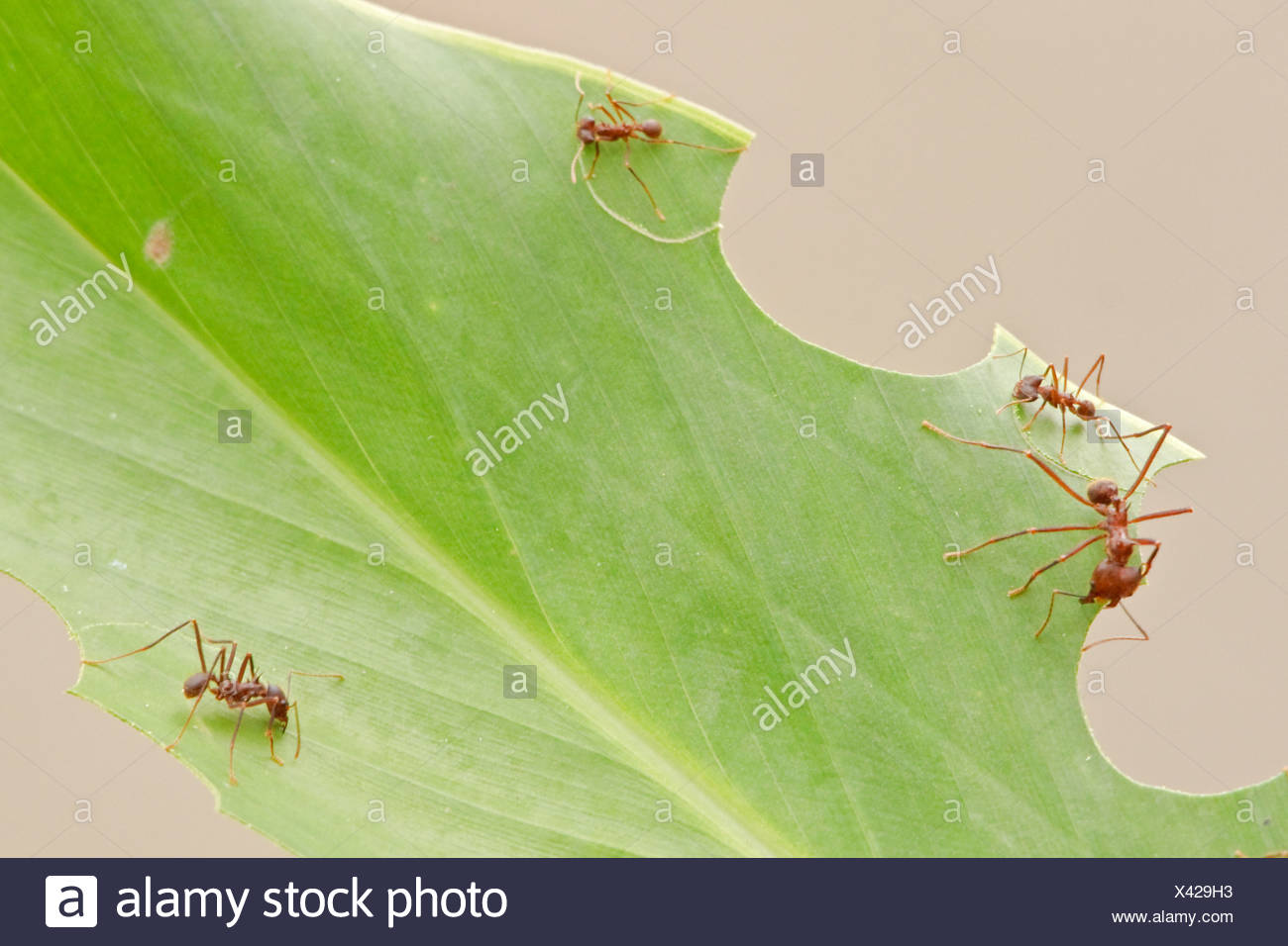 Ants Working Stock Photos Ants Working Stock Images Alamy