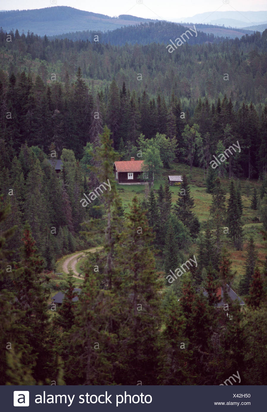 Cottage in the forest - Stock Image