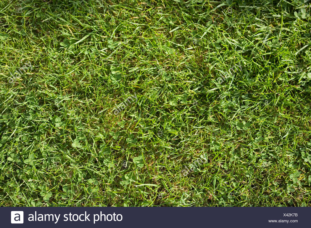 A section of grass lawn, view from above Stock Photo