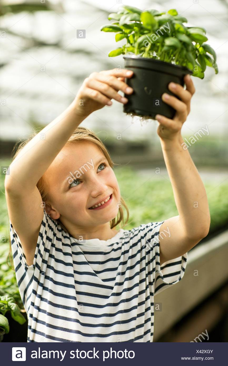 Girl holding up potted basil plant looking at roots smiling - Stock Image