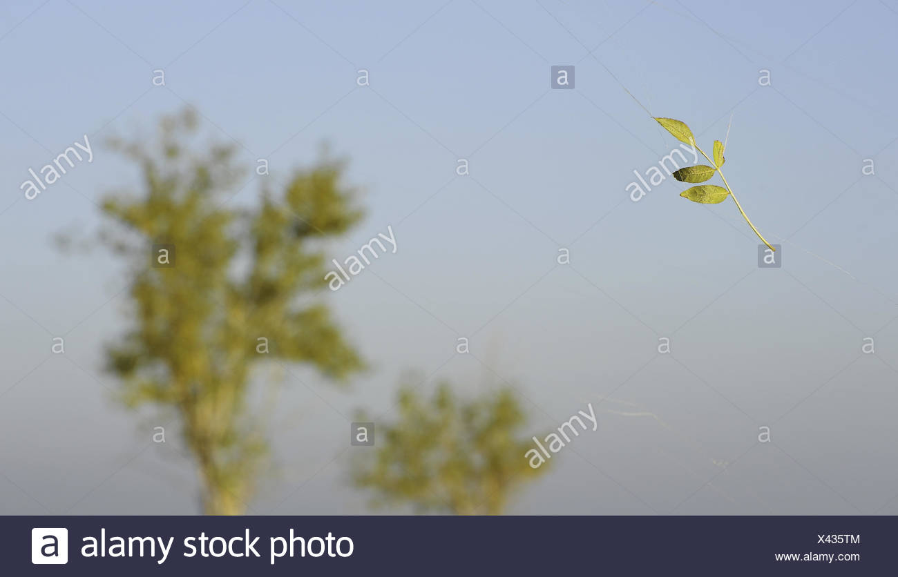 Sheet hanging on cobwebs in the wind - Stock Image