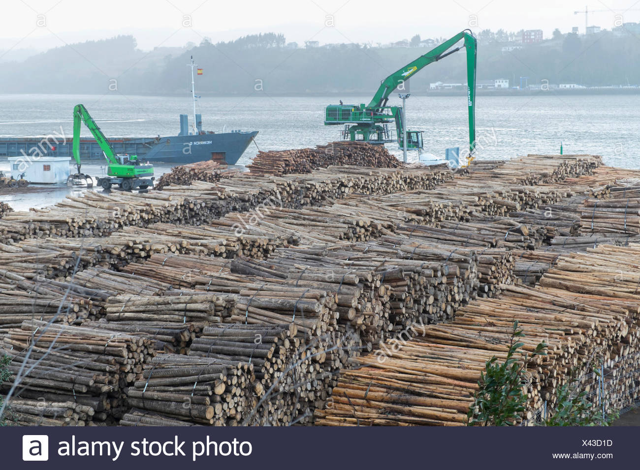 Logs of Tasmanian Blue Gum, Southern Blue Gum or Blue Gum (Eucalyptus globulus), Ribadeo port, Ribadeo, Galicia, Spain - Stock Image