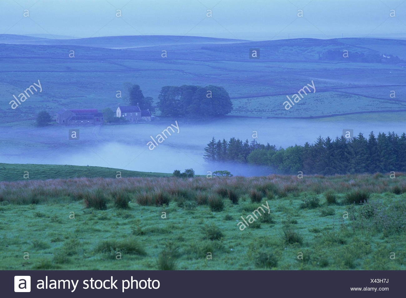 Great Britain, England, Northumbria, scenery, fog, farmhouse, Europe, Northumberland, width, distance, view, meadows, fields, hills, foggy, awfully, morning, atmospheric, deserted, blue, house, remotely, - Stock Image
