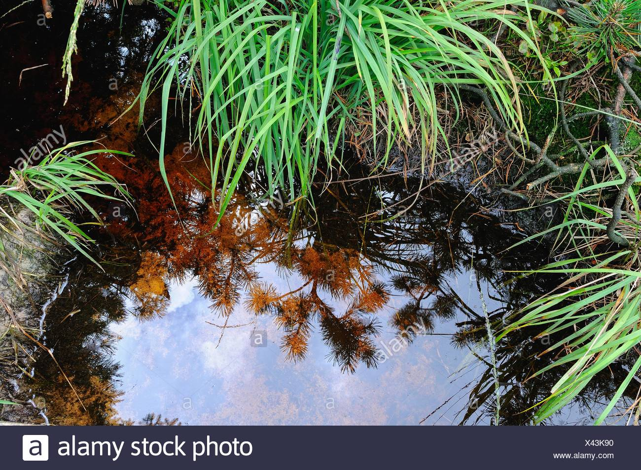 Water reflection in bog water Stock Photo