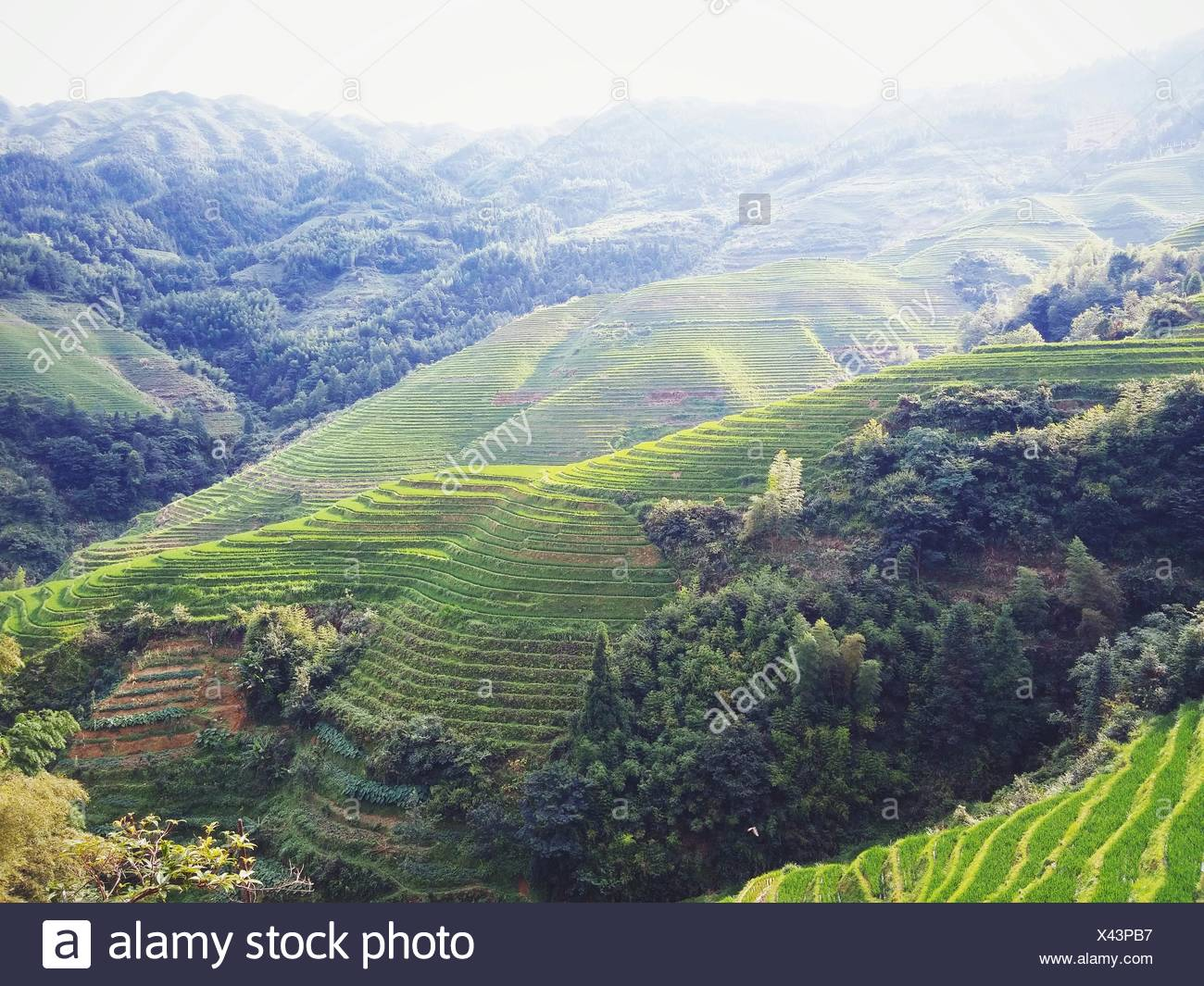 Longji Rice Terraces Against Sky - Stock Image
