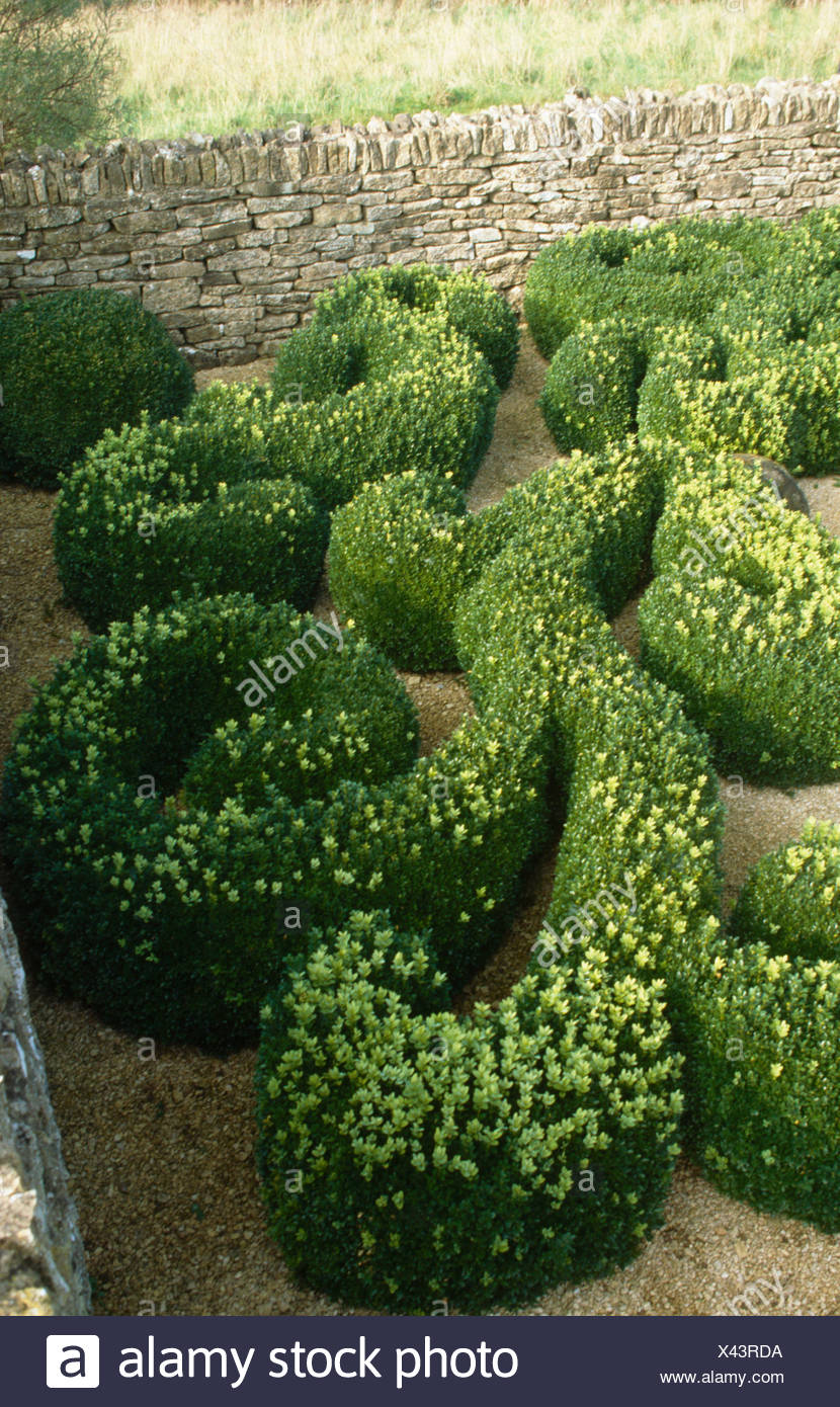 Birdseye view of clipped topiary in stone walled garden - Stock Image
