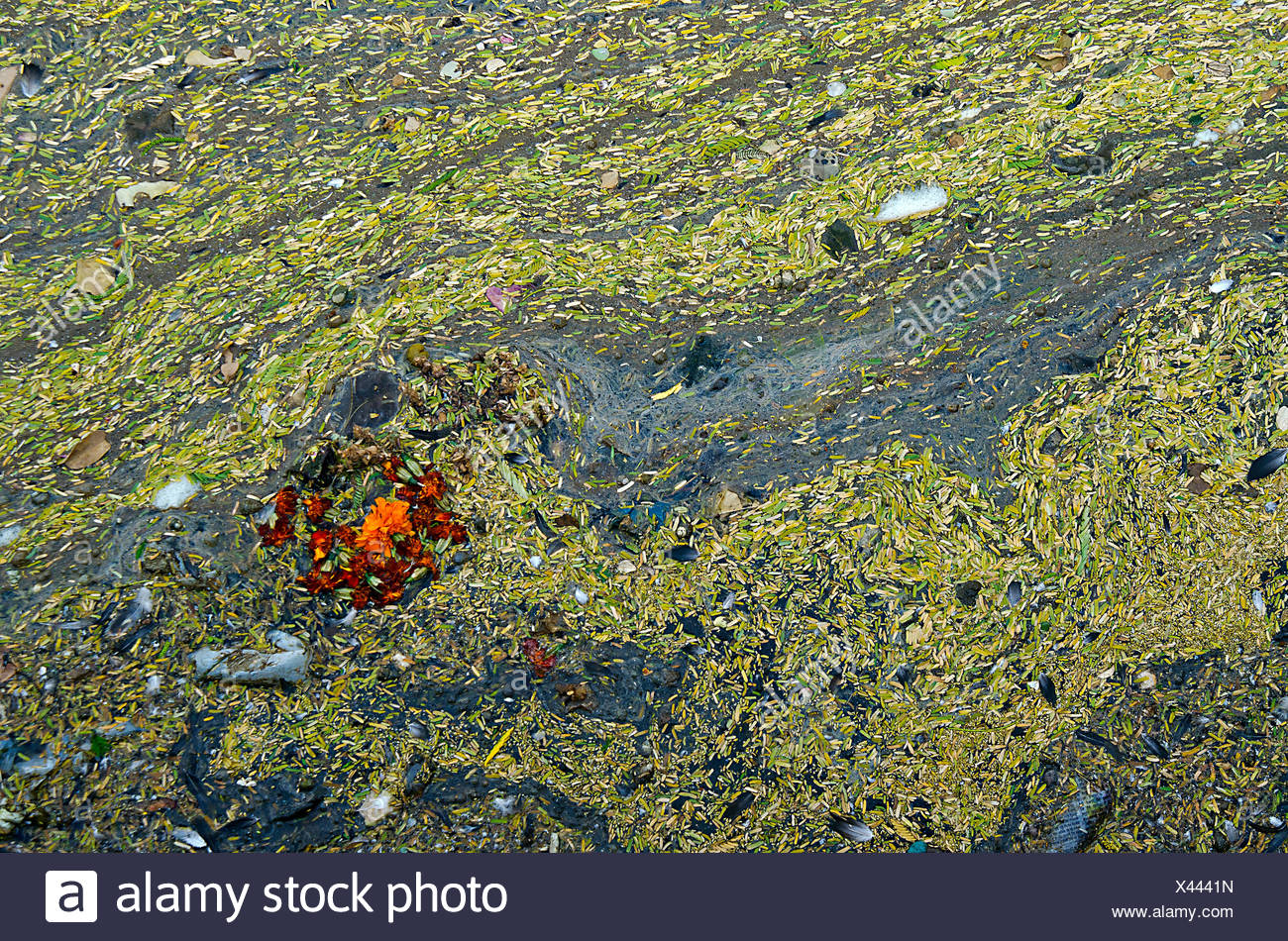 Flowers Floating in Dirty Water - Stock Image