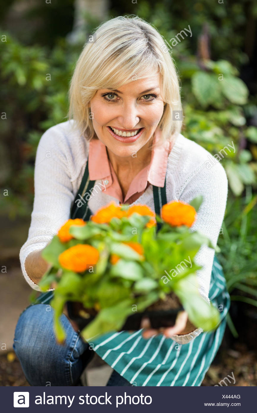Female gardener showing potted flowering plant - Stock Image