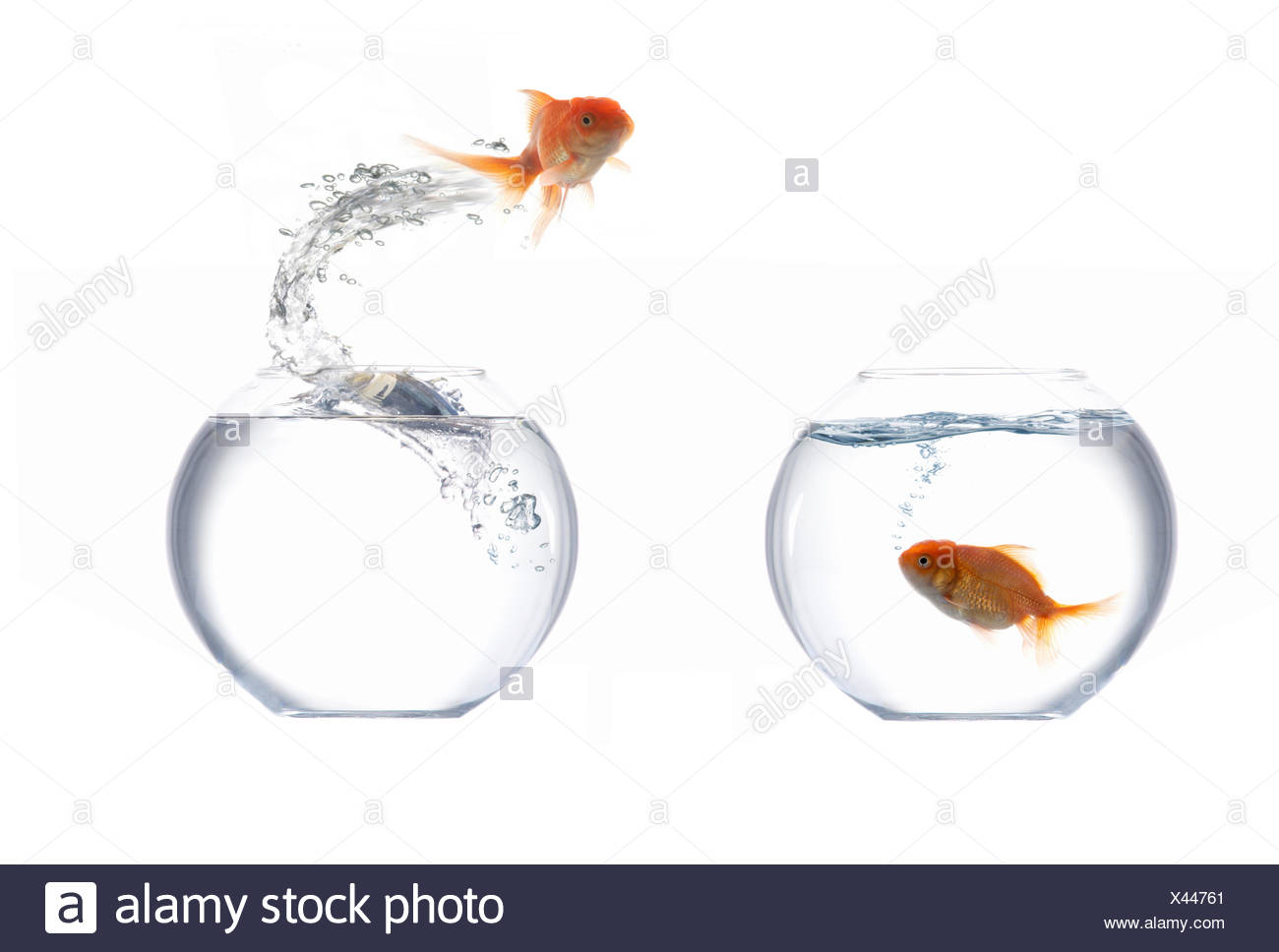 Jumping golden fish Stock Photo