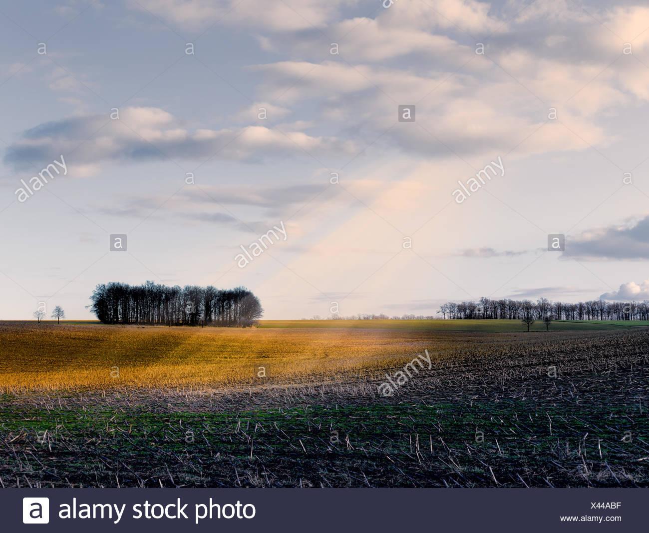Sonnenstrahlen über einem Feld - Stock Image