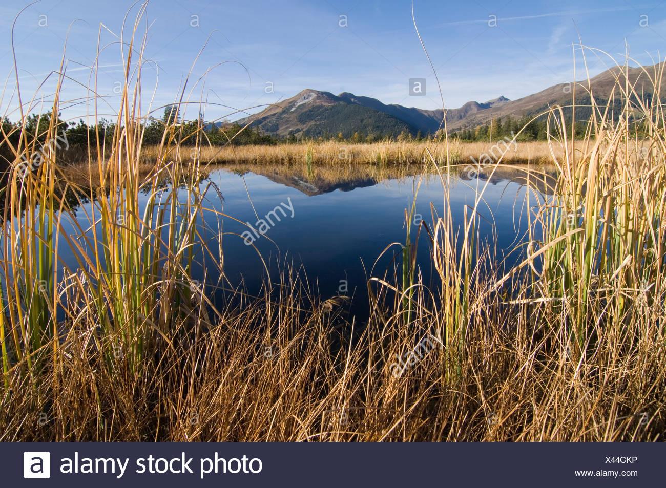 Marshland lake at Sieben Moesern, North Tirol, Austria, Europe Stock Photo